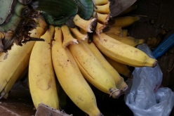apple bananas (Coleman Farms)